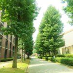 <em>Bokou</em> (母校 – Old School)