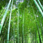 <em>Hachiku no Ikioi</em> (破竹の勢い – Tremendous Momentum)