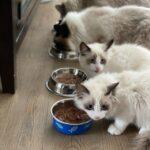 <strong><em>Neko Manma</em></strong> (ねこまんま – Cat's Meal)