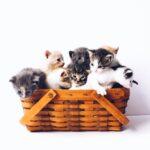 <strong><em>Neko Kentei</em></strong> (ねこ検定 – Cat Test)
