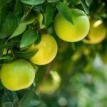 <strong><em>Mi wo Musubu</em></strong> (実を結ぶ – Bearing Fruit)